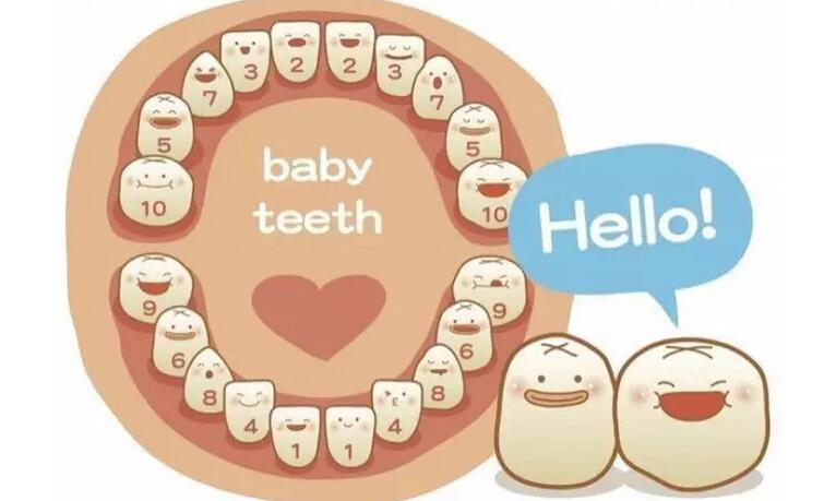 在我国,很多家长认为孩子乳牙迟早要更换,不需要对龋坏的乳牙进行治疗,这导致很多小朋友在满口烂牙中度过了七彩的童年。据不完全统计,我国18岁一下儿童龋病患病率高达66%,但是治疗率不足3%,3岁一下儿童开始刷牙只有13%,仅有9%的家长监督孩子刷牙,这是很让人心酸的数据。 那么乳牙龋坏真的不需要治疗吗?当然不是!口腔科医生提醒,对全身健康而言,乳牙龋齿会影响患儿的生长发育,由于龋齿疼痛,以及乳牙龋坏早失,导致孩子咀嚼功能降低,胃肠消化吸收减弱,造成机体营养不良,生长发育受到影响。此外儿童龋齿引起根尖周围感